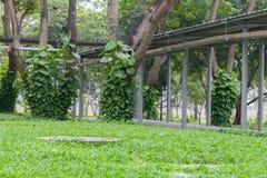 Patetismo de oro verde cerca del árbol Imágenes de archivo libres de regalías