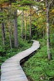Path. Boardwalked nature trail Royalty Free Stock Photography