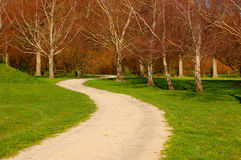 Path. Winding path leading through Silver birch woods Royalty Free Stock Photography
