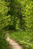Path. Spring green grass and trees with path stock photography
