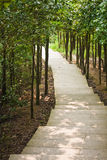 Path. Surrounded by a lot of trees Royalty Free Stock Photos