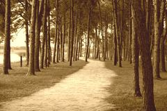 The Path. A walking path through the forest in sepia Royalty Free Stock Images