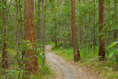 Path. Foot path in Daisy hill park in the trees springwood queensland Stock Image