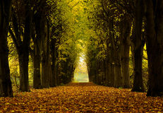 Path. In autumn colors a day with light haze Royalty Free Stock Images