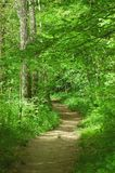 Path. Dirt path through forest royalty free stock images