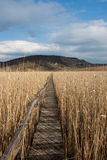 Path. Wooden walking path trough the Natural Reed Reservation from Sic, Romania Stock Photo