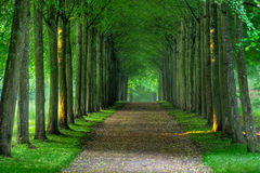Path. Of trees early one morning Royalty Free Stock Photos