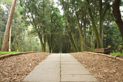 A path Royalty Free Stock Photography