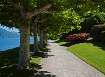 Tree lined path on shore of Lake Como Royalty Free Stock Image