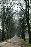 Path. A long dirt path flanked by tall trees, leafless in the autumn/winter season Stock Image