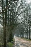 Dead end. A long dirt part, flanked by tall, leafless tress, probably in autumn or winter Royalty Free Stock Photo