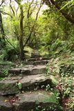 Path. With stone steps into a rain forrest in Taiwan Stock Photo