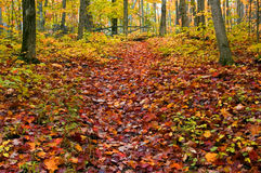 Path. In maple forest near Killarney Lake. October Royalty Free Stock Image