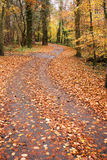 The path. Trek or path of leaves through forrest Stock Images