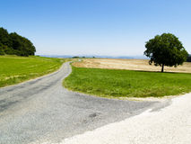 Path. Rural path one tree on the field. Sunny summer day. France Royalty Free Stock Photography