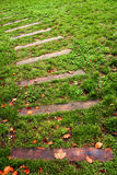 Path. Wooden path in a green lawn Stock Photography