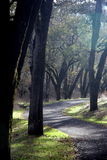 Path. A Path through the trees Royalty Free Stock Image