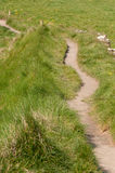 Path. Foot path in spring landscape Royalty Free Stock Photo