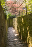 Path above old town of Heidelberg Germany Stock Photos