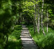 Path Acadia National Park in Maine. Wooden Path in Acadia National Park in Maine stock photography