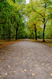 A Path Across Berlin. A beautiful path in the Grunewald forest Royalty Free Stock Images