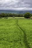 Path across field Stock Photo