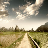 Path across the fields Royalty Free Stock Photography