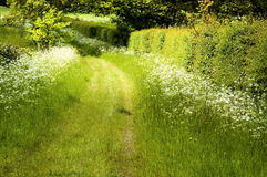 Path across a lush green field Stock Photos