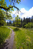 Path across the meadow covered with bright grass. Footpath passing through spring sunny joyful cheerful glade with grass and trees with a large branch over Stock Photography