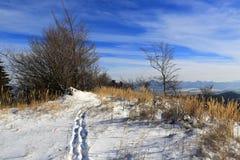 Path across meadow in mountains. Winter landscape with path across meadow in mountains Royalty Free Stock Photos