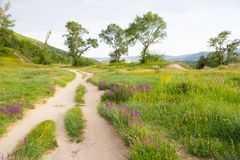 Meadow path with flowers Stock Photo