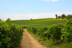 Path across vineyards, Italy Royalty Free Stock Images