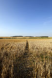 Path in the agricultural field Royalty Free Stock Photos