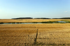 Path in the agricultural field Stock Image
