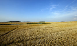 Path in the agricultural field. A narrow path in the agricultural field, which is tapered wheat. In the background to harvest Stock Photos