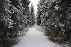 Path in the Alaskan Wilderness. Royalty Free Stock Image