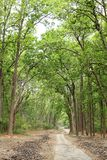 A path and all the way green in Jim Corbett Royalty Free Stock Photo