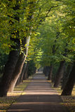Path between alley of sloping trees Royalty Free Stock Photography