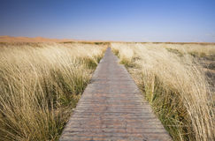 The path along the cliff reed Royalty Free Stock Images
