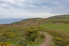 Path along the cliffs with shrubs along the north sea coast of howth , ireland. Hiking trail along rocky cliffs on the north sea coast of howth, ireland with royalty free stock photo