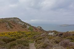 Path along the cliffs with shrubs along the north sea coast of howth , ireland. Hiking trail along rocky cliffs on the north sea coast of howth, ireland with stock image