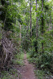 Path along the forest in Thailand Royalty Free Stock Photos