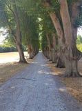 Path along a gravel road under many trees stock photos