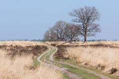 Path along the heather at Deelerwoud in the Netherlands. A sandy path is crossing the moor at the Deelerwoud in the Netherlands. A couple of trees are still stock photos