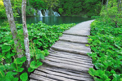 Path along a lake royalty free stock photos