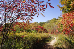 Path Along the Niagara Escarpment Stock Image