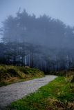 Gravel path leading into misty forest from North Head Cape Disappointment Washington. Gravel path leading into misty forest Royalty Free Stock Photography