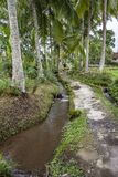 Path along the rice paddies in Ubud, Bali, Indonesia stock photography