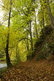 Path along river in fall forest Royalty Free Stock Photos