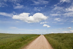 Path along the wheat fields Royalty Free Stock Photography